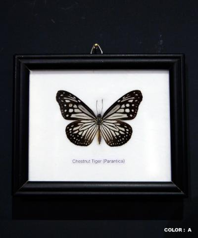 KRAFTRIPS / BUTTERFLY SPECIMEN COLLECTION 1fig collection frame