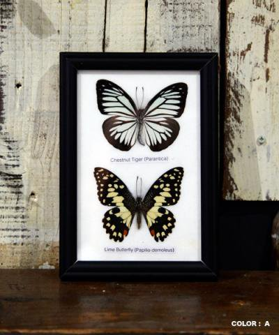 KRAFTRIPS / BUTTERFLY SPECIMEN COLLECTION 2fig collection frame