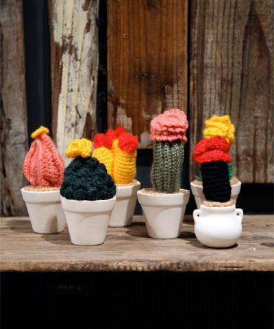 Niche / fragrant cuctus