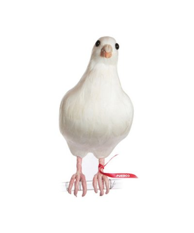 PUEBCO / ARTIFICIAL BIRDS Dove - L