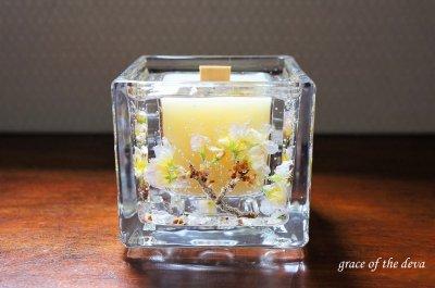 Sakura Botanical candle -beewax square-
