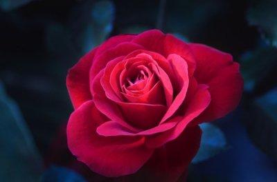 【Hermosa 最高の美しさ】〜寵愛されし者・美しき神后〜