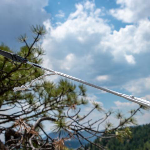 Hummingbird Tree Straps
