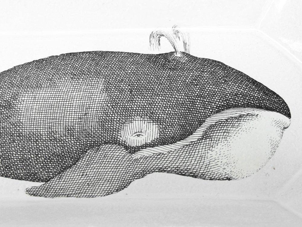 アスティエ・ド・ヴィラット ASTIER de VILLATTE ジョン・デリアン JOHN DERIAN クジラ Whale ロングプラッター スクエアプレート 長皿 ●