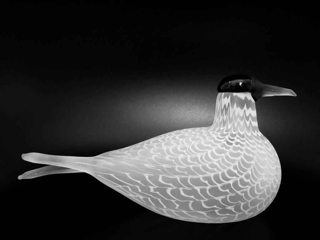 イッタラ iittala イッタラバード Species of Tern 406/3000 オイバ・トイッカ Oiva Toikka 1988-92 ●