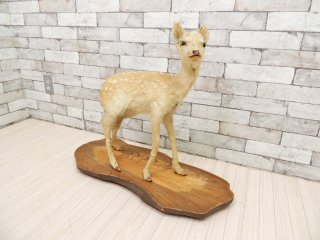 小鹿 剥製 オーク材 台座付き 置物 実寸大 全身  インテリア オブジェ 角 標本 動物  ●