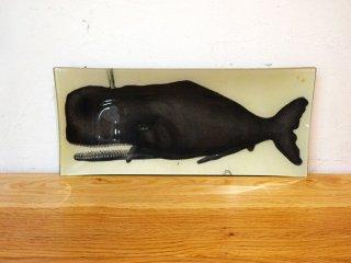 ジョン・デリアン JOHN DERIAN クジラ デコパージュプレート 飾り皿 ガラス スクエア  アメリカ製 ホエール 鯨 ★