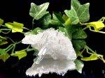 ヒマラヤ産水晶クラスター CT-802 200g