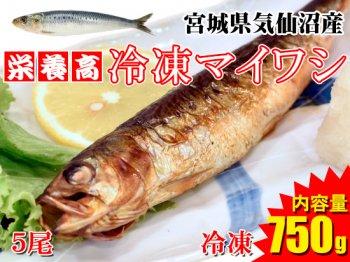 【ヘルシーさかな!】気仙沼産冷凍マイワシ ※5尾/850g