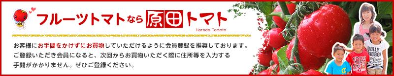 【徳島産】最高級フルーツトマト原田トマト(糖度8度以上、数々の賞を受賞!)