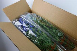 お花の産地から直送!北海道産デルフィニウム(2色)60cm 計20本入
