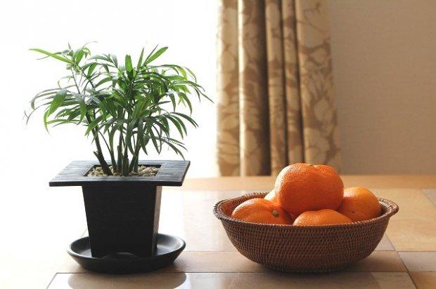 アタ製品プレーン皿かご画像
