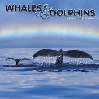 2012年 輸入 クジラとイルカ カレンダー