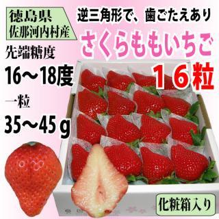 徳島県 佐那河内村産 「さくらももいちご」16粒 化粧箱入り 送料無料