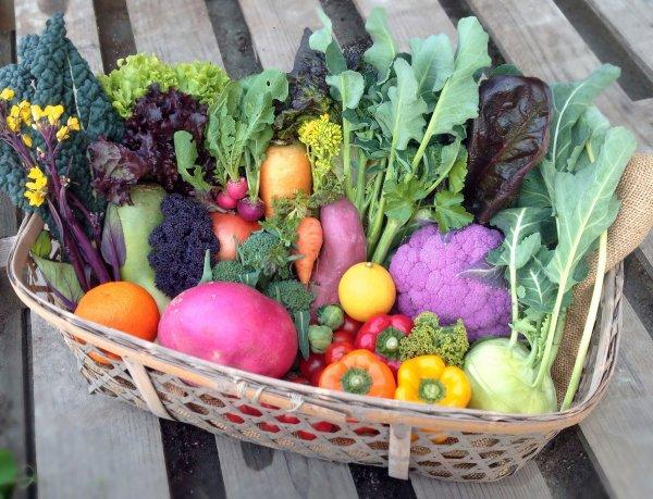【定期便6ヵ月】COSMOFARM農園野菜詰合せBOX(小)