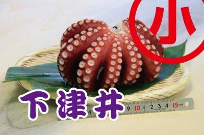 大政特選 約0.5kg 下津井(岡山県)産