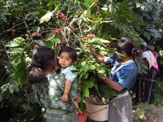 グアテマラ アンティグア レタナ農園 200g