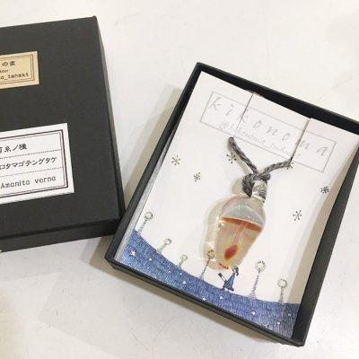 きこのま「菌糸ノ種 シロタマゴテングタケ」