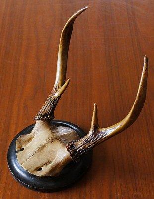 鹿のハンティングトロフィー