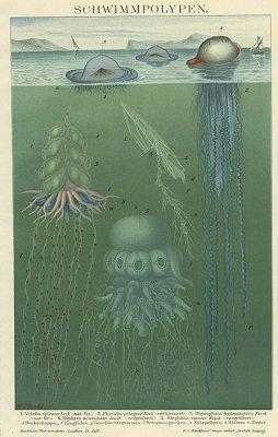 海洋図版/ドイツ1894年