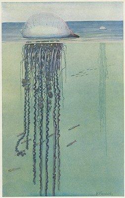 海洋図版/ドイツ1900年前後