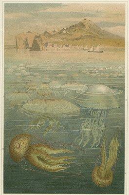 海洋図版/ドイツ1897年
