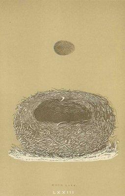 鳥の巣と卵 図版「WOOD LARK」/イギリス1896年