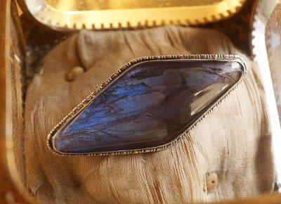モルフォ蝶の翅のブローチ