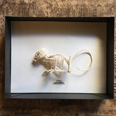 nikibbit「骨のブローチ」