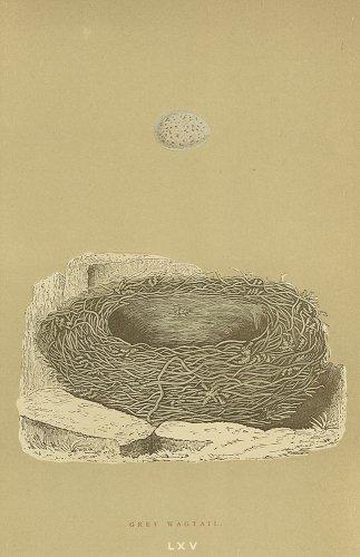 鳥の卵の図版/イギリス1896年