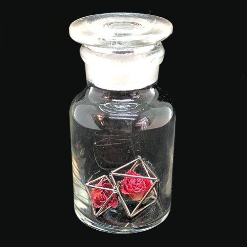 植物標本 Rose小