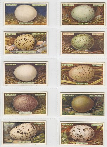 シガレットカード「BIRD'S EGGS」10枚セット/イギリス1923年