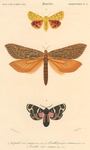 昆虫の図版/フランス1849年