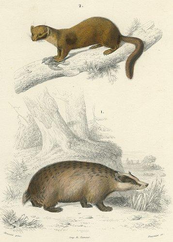 動物の図版/フランス1849年