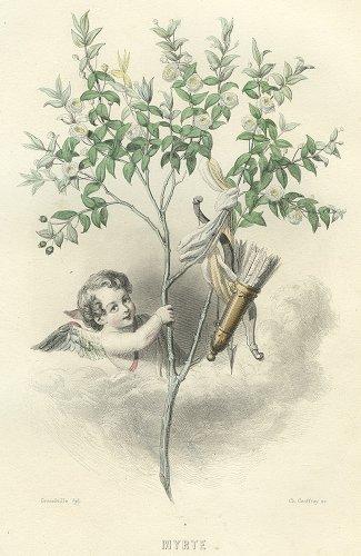 J・J・グランヴィル  「花の幻想」より「MYRTE」(フランス1847年)