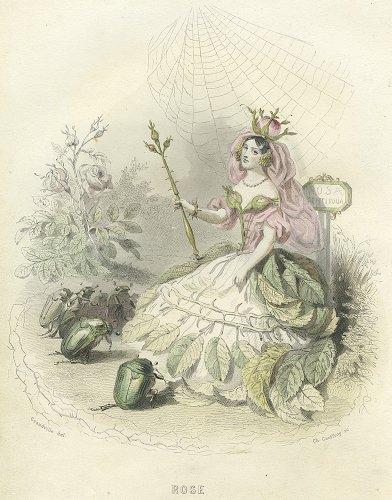J・J・グランヴィル  「花の幻想」より「ROSE」(フランス1847年)