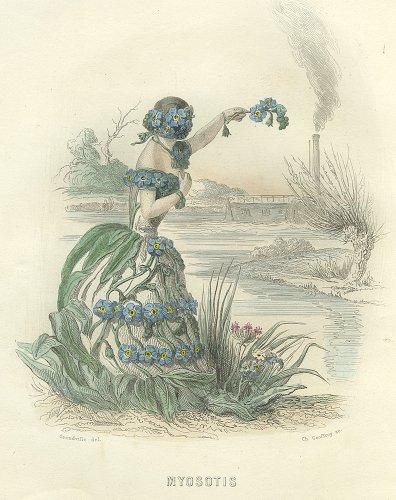 J・J・グランヴィル  「花の幻想」より「MYOSOTIS」(フランス1847年)