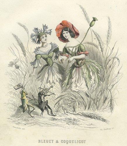J・J・グランヴィル  「花の幻想」より「BLEUET & COQUELICOT」(フランス1847年)