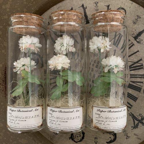 Locca/紙花ボトル標本 シロツメクサ