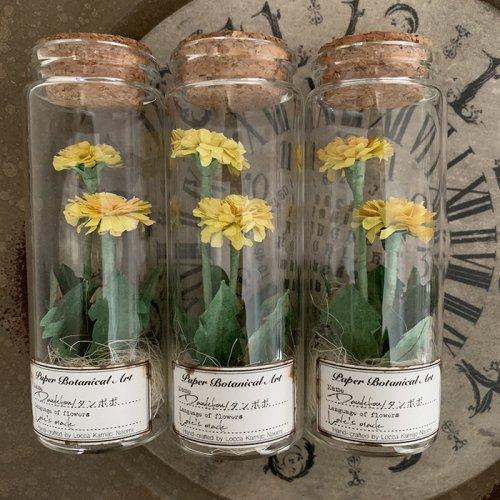 Locca/紙花ボトル標本 タンポポ