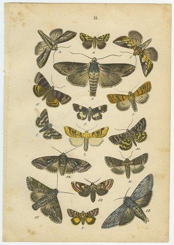 昆虫の図版