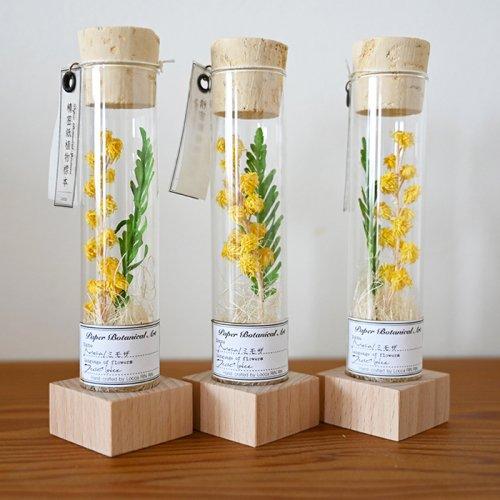 Locca/紙花ミモザ試験管入り 木製土台付き