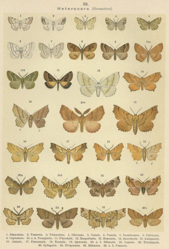 蝶と蛾の図版