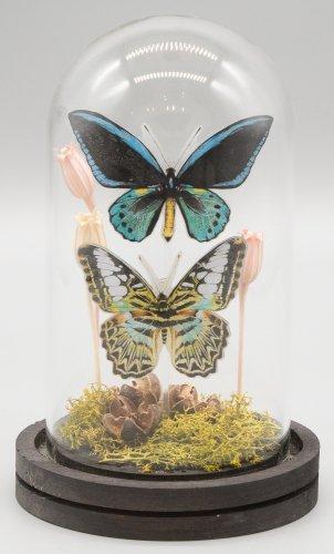「無国籍な昆虫採集I」/きらら
