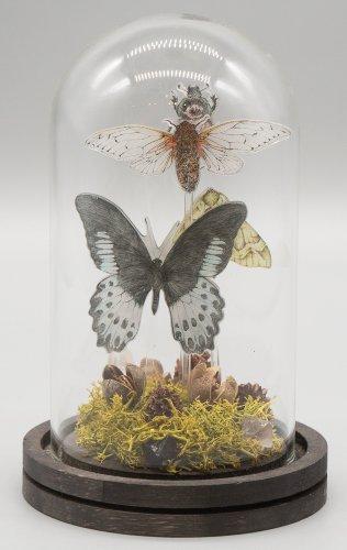 「無国籍な昆虫採集II」/きらら