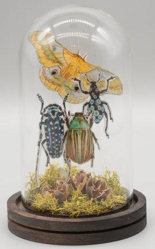 「無国籍な昆虫採集III」/きらら