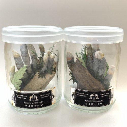 紙きのこワンカップ標本(マメザヤタケ)/Locca