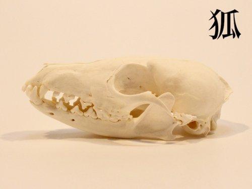 狐頭骨/スカルフィリア