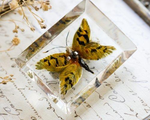 ルーサイト・リバースインタリオの蛾のブローチ
