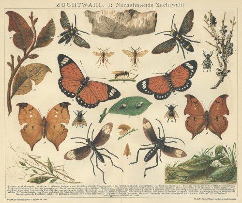 博物図版「昆虫」(ドイツ 1895年)